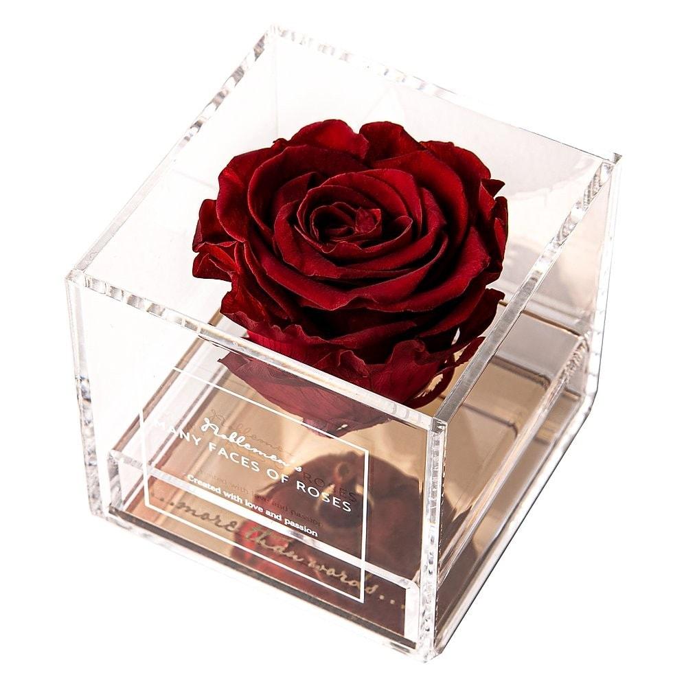 róża-red-dark