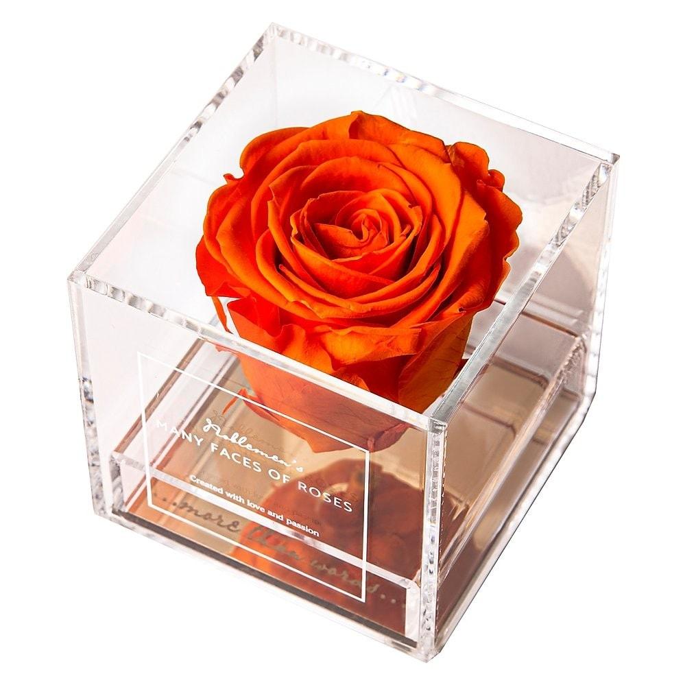 róża-orange