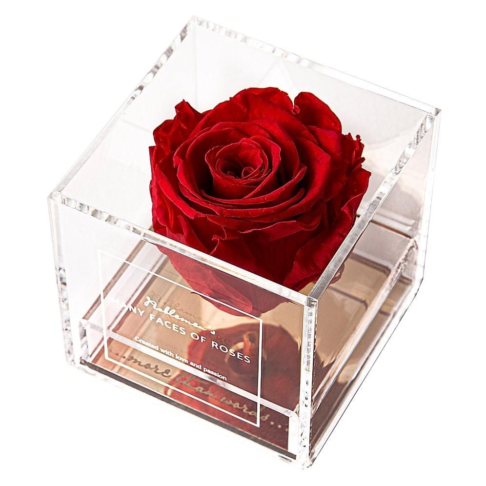 róża-red