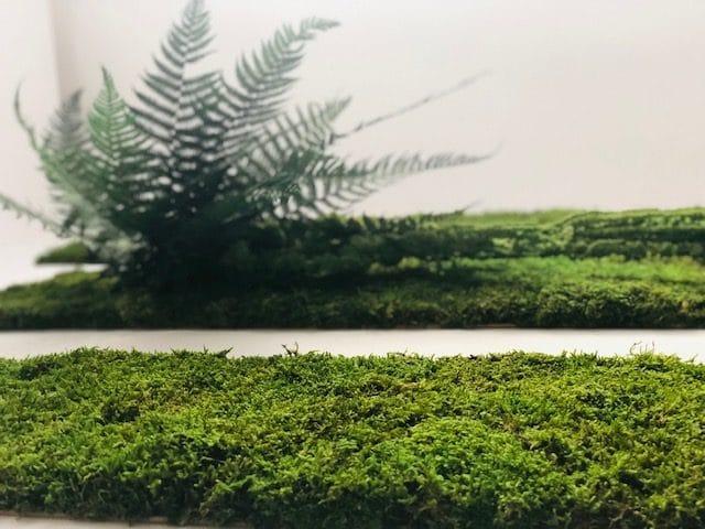 zielone-sciany-mech
